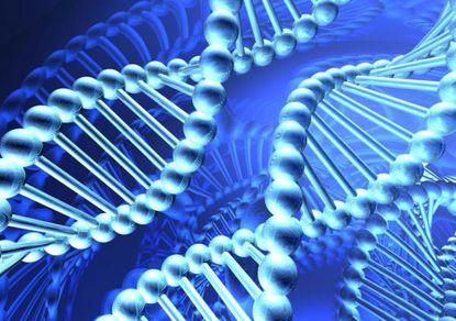 Модель ДНК