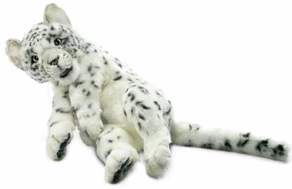 Hansa Snow Leopard Kitten